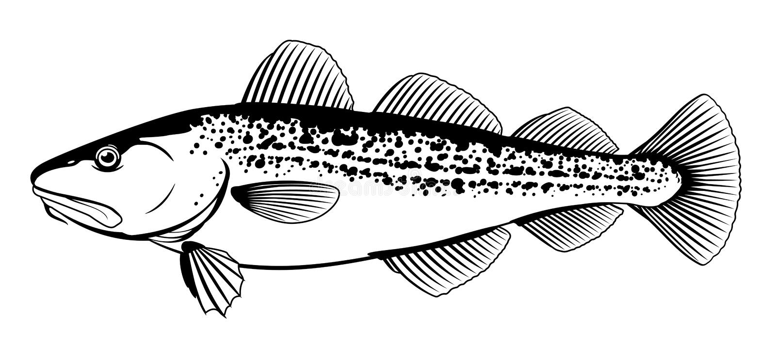 Atlantic Cod Black and White Fish. One Atlantic cod fish from one side in black and white color, isolated stock illustration