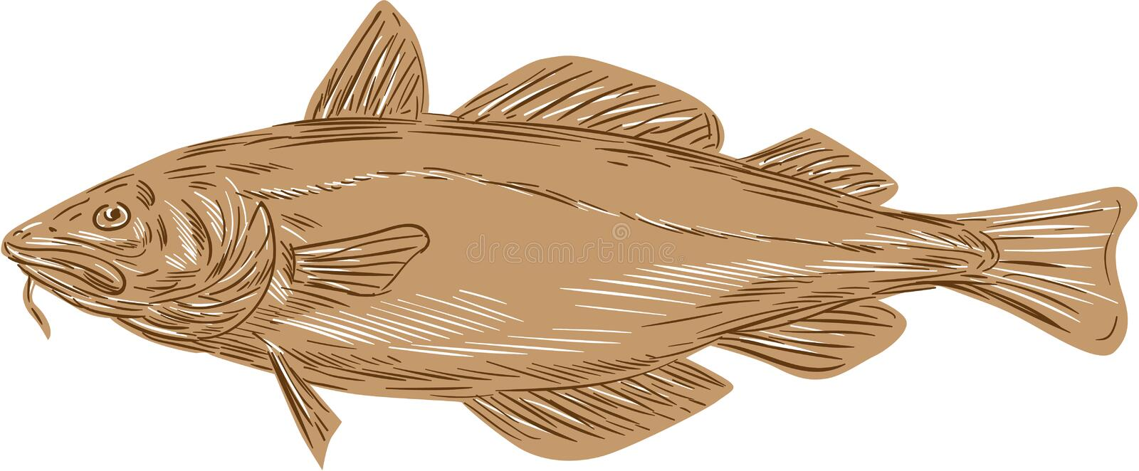 Atlantic Cod Codling Fish Drawing. Drawing sketch style illustration of an Atlantic cod, or Gadus morhua, a benthopelagic fish of the family Gadidae, also vector illustration