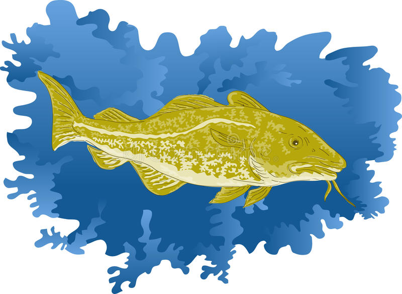 Atlantic cod fish. Vector illustration of atlantic cod fish done in water color style royalty free illustration