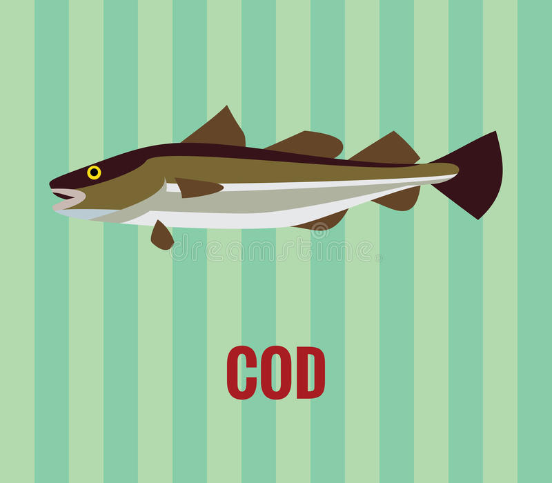 Atlantic cod. Vector resizable drawing of a cod on green background vector illustration