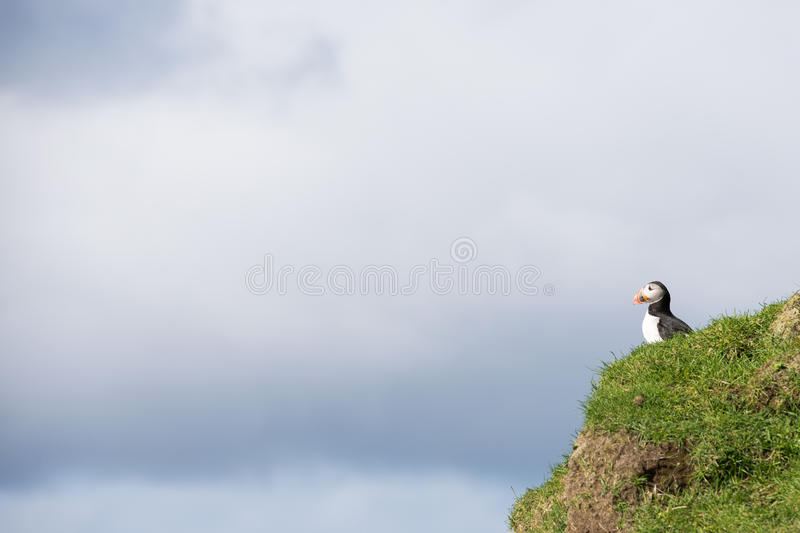 Atlantic puffin, Fratercula arctica. Sitting on a cliff on the Faroe Islands with cloudy sky in the background stock images