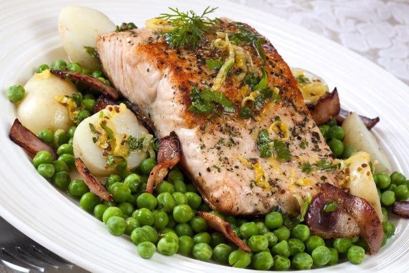 Atlantic Salmon royalty free stock images