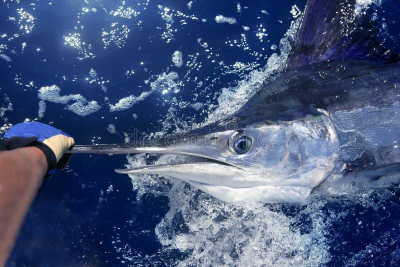 Atlantic white marlin big game sport fishing. Over blue ocean saltwater stock image