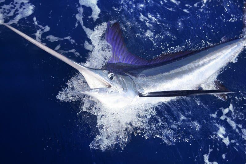 Atlantic white marlin big game sport fishing. Over blue ocean saltwater