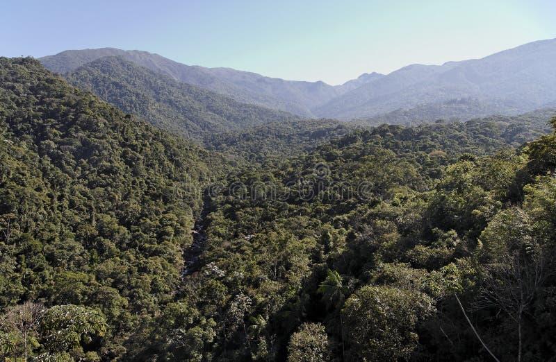 atlantica floresta itatiaia国家公园 免版税库存图片