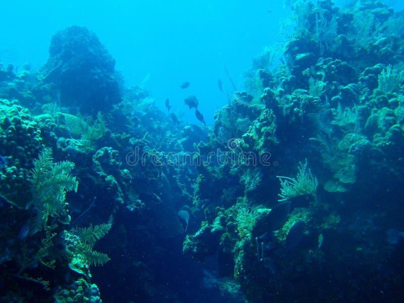Atlantis stockfotos