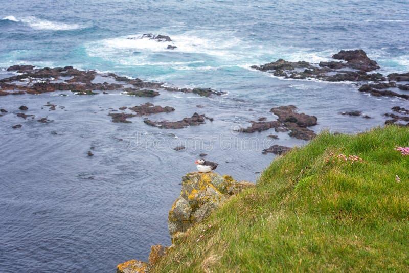Atlantische papegaaiduiker enige vogel op de steen tegen de oceaanachtergrond, mooi de zomerlandschap stock foto