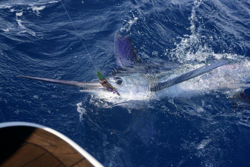 Atlantische witte de sport van het marlijn grote spel visserij stock foto