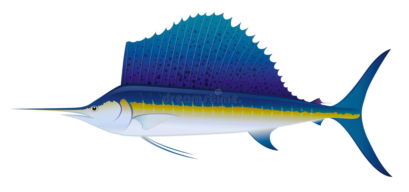 Atlantischer Segelfisch. vektor abbildung