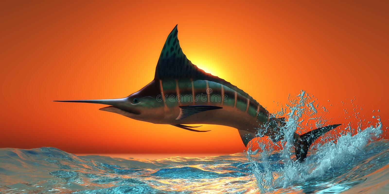 Atlantycki Błękitny Marlin ilustracja wektor