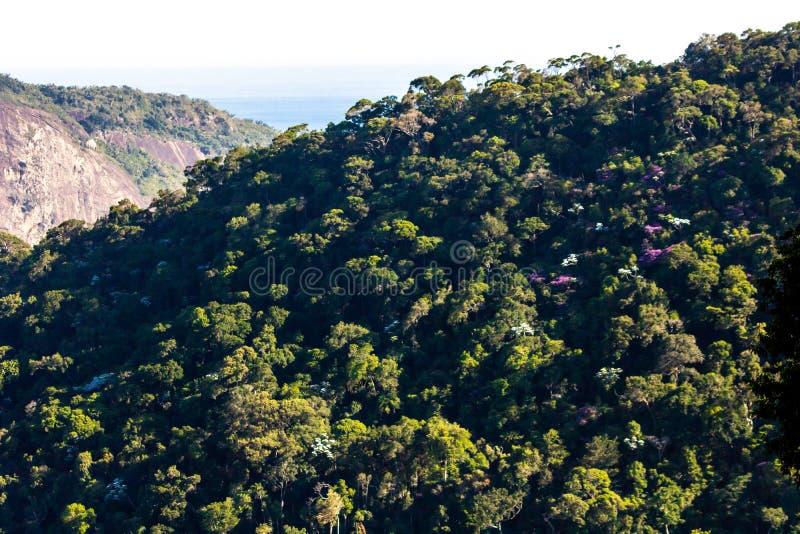 Atlantyckiego tropikalnego lasu deszczowego Tijuca Lasowy park narodowy, Rio De Janeiro, Brazylia fotografia stock