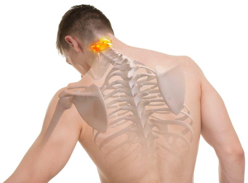 Atlas C1 C2 Spine Anatomy Isolated On White Stock Photo Image Of