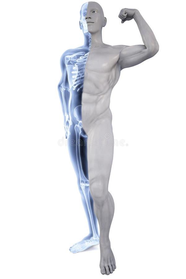 Atleet onder Röntgenstralen royalty-vrije illustratie