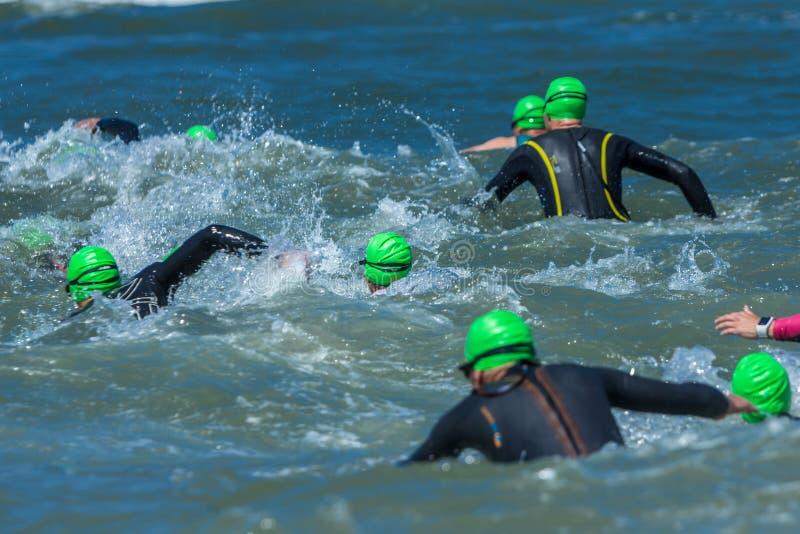 Atleti di triathlon che si imbattono nel mare per la gamba di nuotata immagini stock libere da diritti