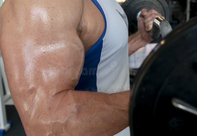 Atlety bodybuilder trząść mięśnie w gym, wykonuje podnosić baru na bicep zdjęcia royalty free
