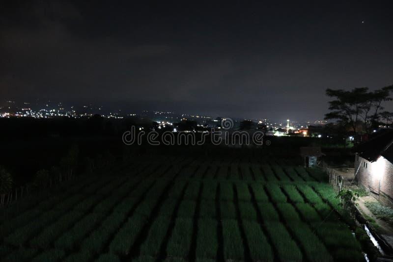 Atmosfären av lökkolonier på nattbakgrundsljus som blänker staden arkivfoto
