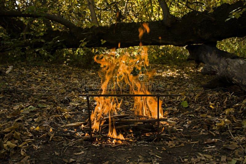 Atmosfärisk flamma vid brandcloseupen Campa fritid utomhus- rekreation f?r lunch Härlig orange brand med rök med kopieringsutrymm royaltyfria bilder