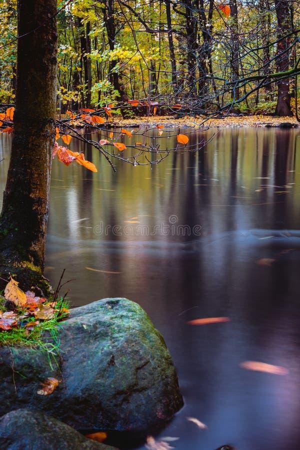 Atmosfera misteriosa no lago tranquilo da floresta do outono Superfície calma do lago, exposição longa fotos de stock royalty free