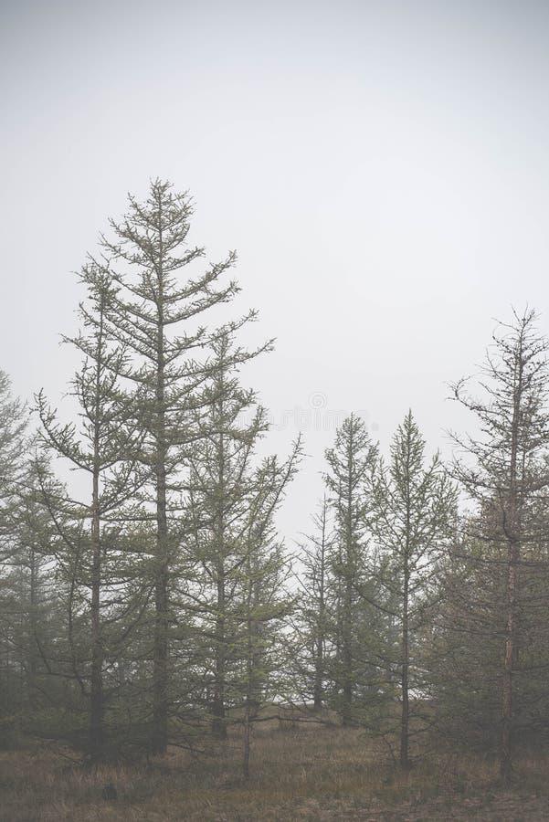 Atmosphärische Landschaft der Olkhon-Insel unter dem Nebel in Sommer 2015 Der Baikalsee, Russe Sibirien lizenzfreie stockfotografie