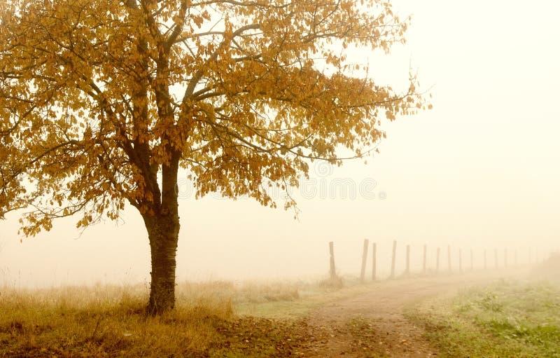 Atmosphere Of Haze Royalty Free Stock Image