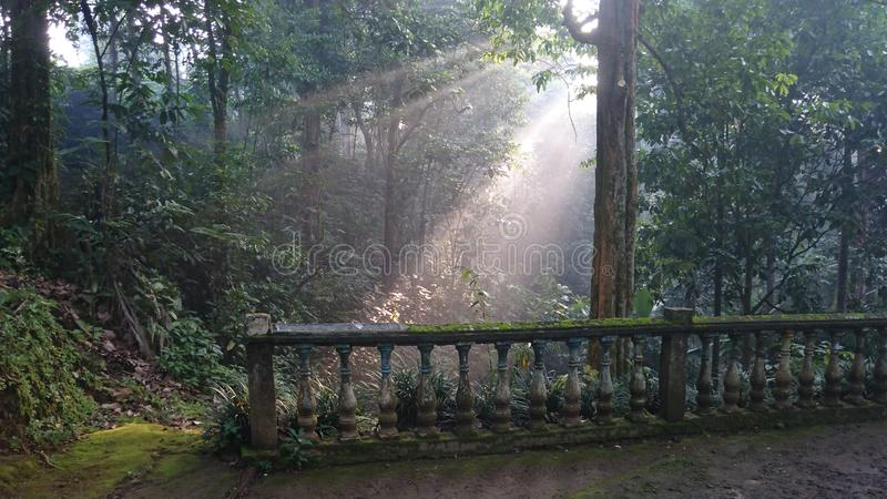 The atmosphere of the morning sunshine among trees in a beautiful tropical forest stock photography