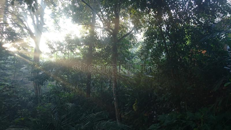The atmosphere of the morning sunshine among trees in a beautiful tropical forest stock images