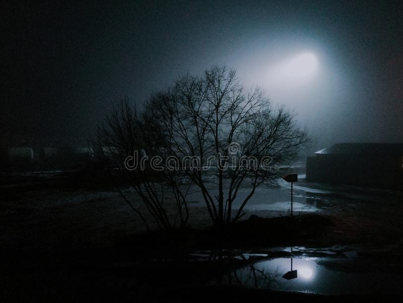 Atmosphere night tree thriller. Nights are dark in russia. Shining moon and perfect atmosphere! Looks like a dark horror story royalty free stock photo