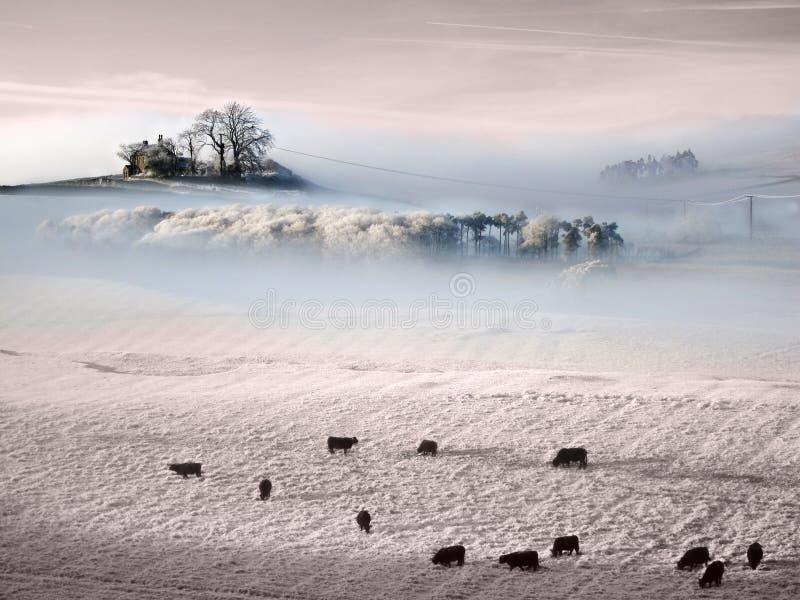Atmospheric frozen Prairie royalty free stock image