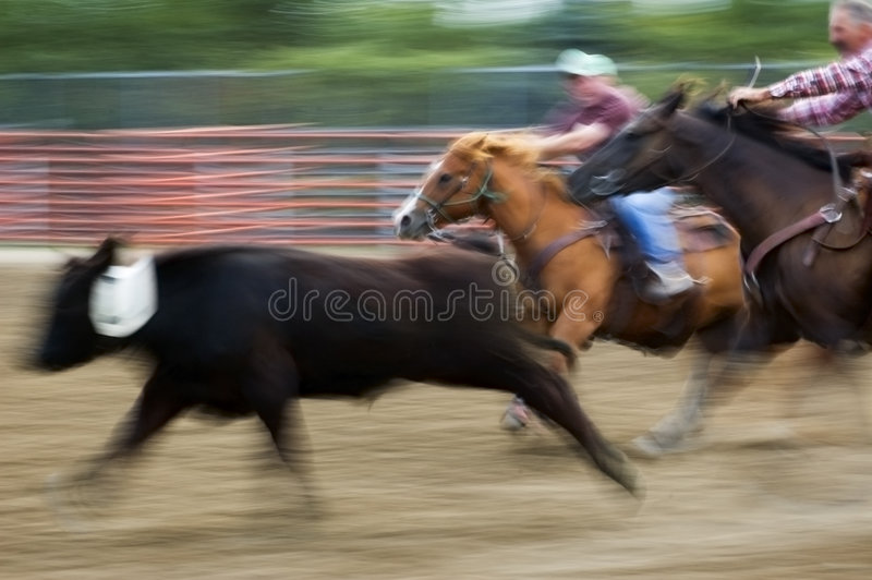 Atmospheric Rodeo Panning and Motion Blur. Horseback cowgirl and cowboy chase down calf at rodeo - panning and motion blur stock photo