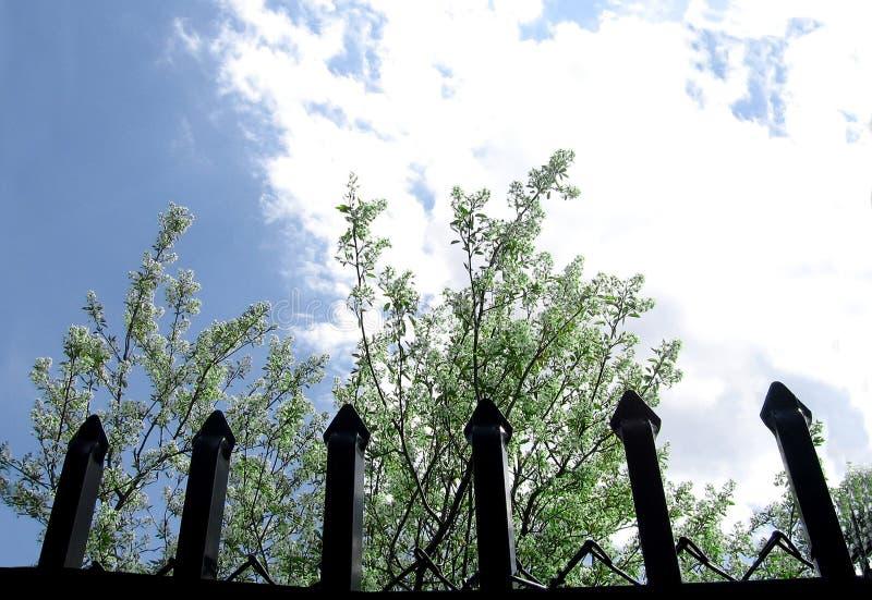 Download Atrás da cerca imagem de stock. Imagem de cerca, árvore - 113517