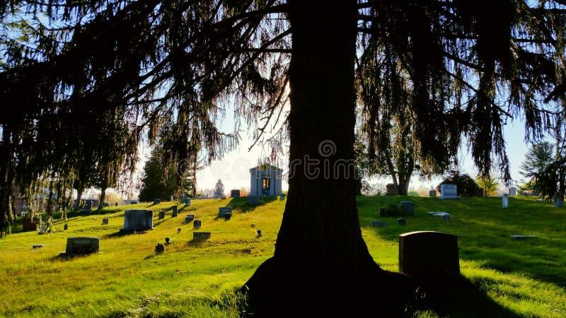 Atrás de Willow Tree fotos de stock royalty free
