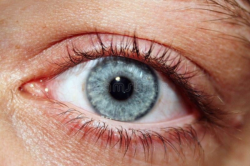 Atrás dos olhos azuis fotos de stock