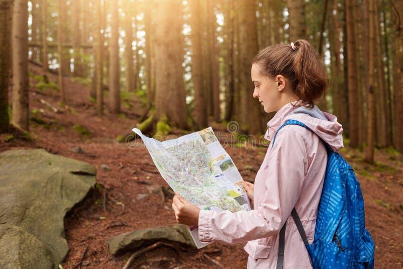 Atrakcyjna energiczna młodej damy mienia mapa w oba rękach, patrzejący attentively przy mapą, dostawać gubjący w lesie, ulepsza zdjęcie stock