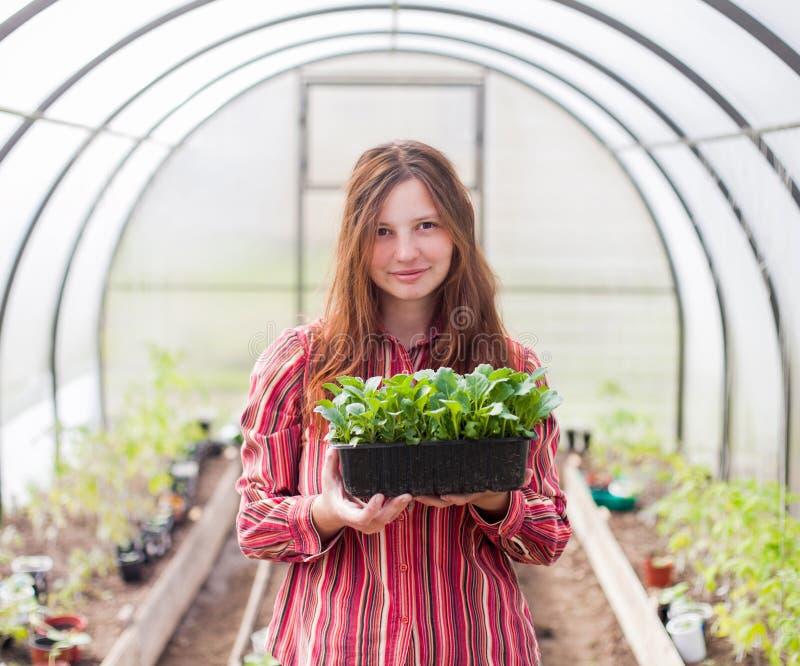 Atrakcyjna młodej kobiety mienia rozsada w szklarni zdjęcie stock