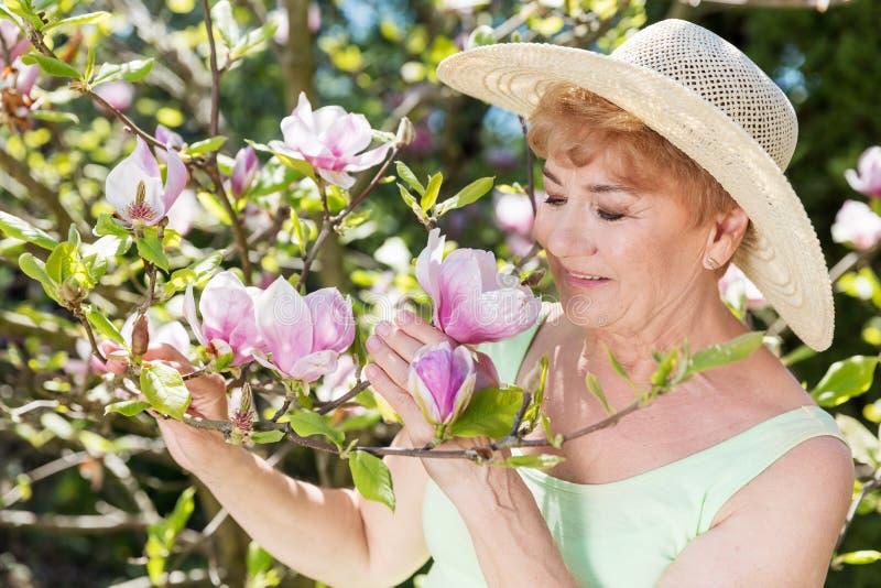 Atrakcyjna starsza kobieta podziwia magnoliowych kwiaty w lato ogródzie zdjęcie royalty free