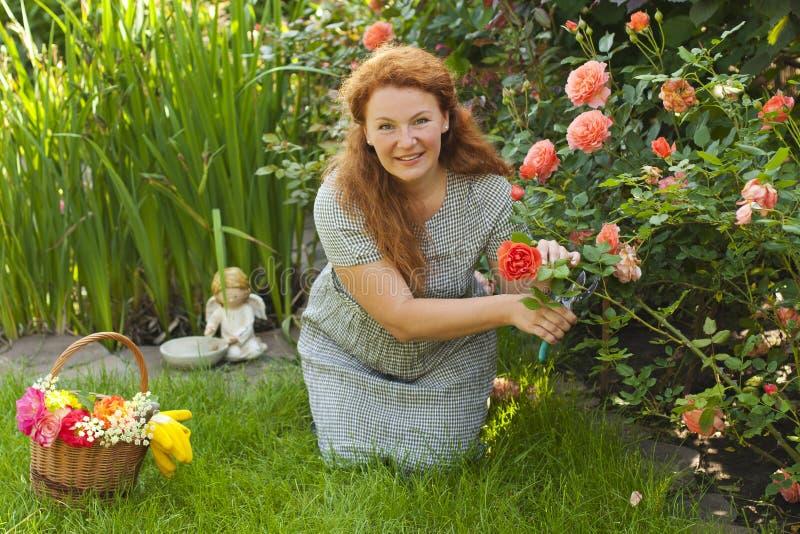 Atrakcyjne dorosłej kobiety cięć kwiatów róże w jardzie zdjęcia stock