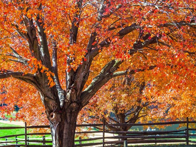 atrakcyjnych jesień piękna nakrywkowych liść klonowa nagości portreta kobieta zdjęcia stock