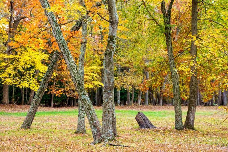 atrakcyjnych jesień piękna nakrywkowych liść klonowa nagości portreta kobieta obraz stock