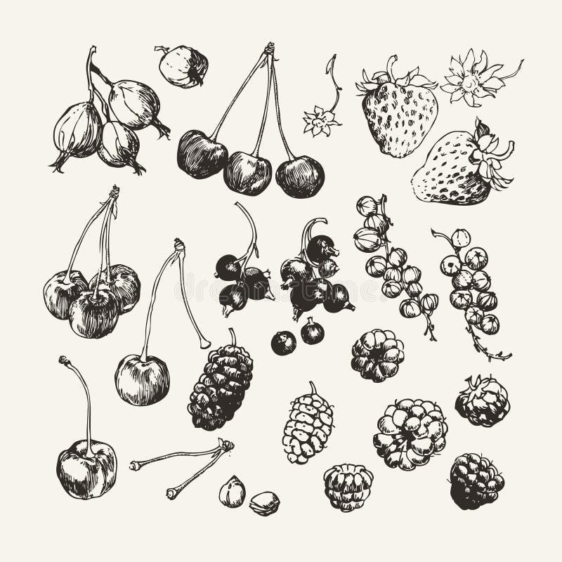Atrament rysująca kolekcja jagody ilustracji