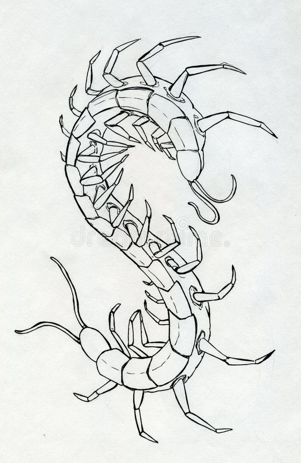 Download Atrament Rysujący Centipede Ilustracji - Obraz: 38106219