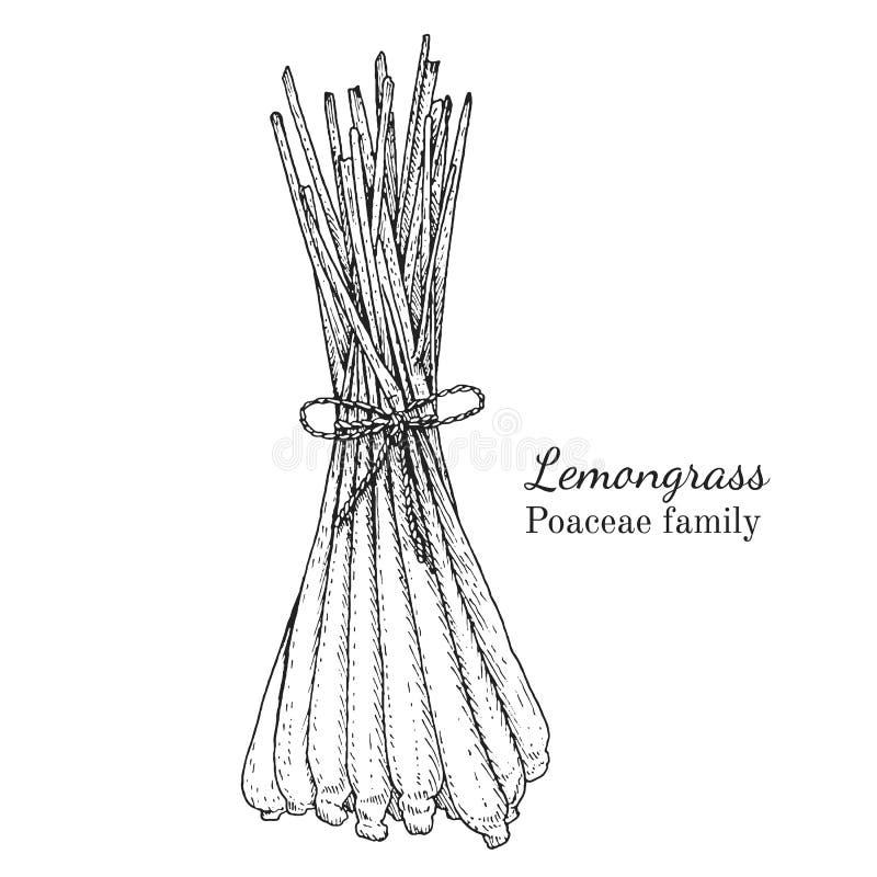 Atramentu lemongrass ręka rysujący nakreślenie royalty ilustracja