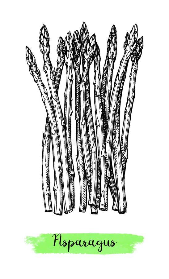 Atramentu nakreślenie asparagus ilustracji