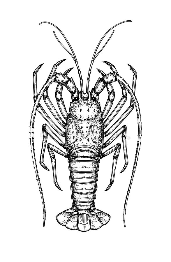 Atramentu nakreślenie spiny homar royalty ilustracja