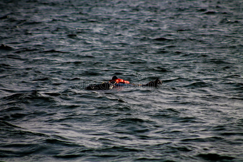 Atrapa unosi się w morzu zdjęcia royalty free