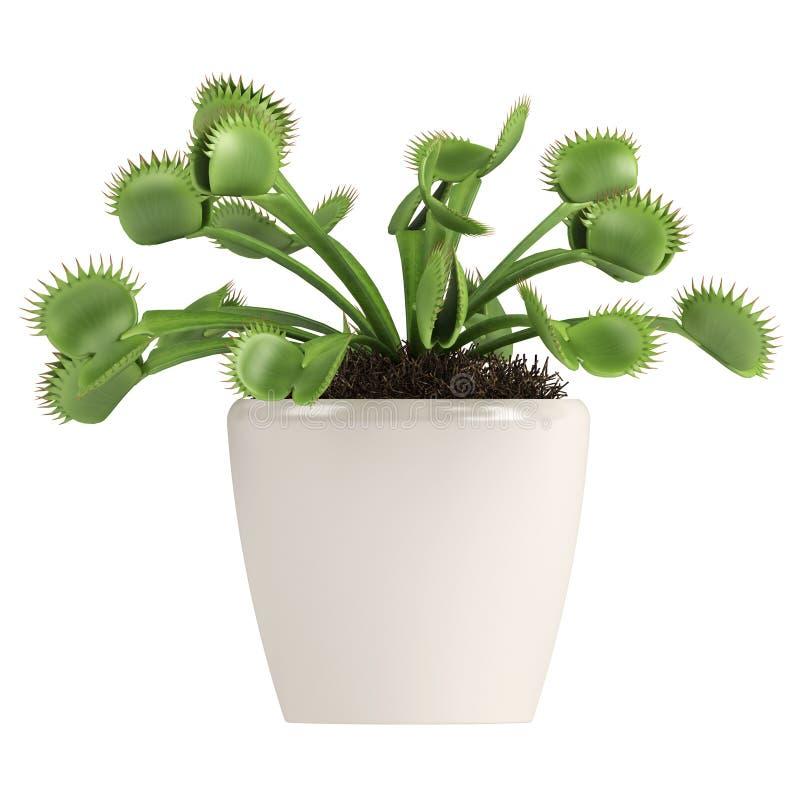 Atrapamoscas de Venus, muscipula del Dionaea ilustración del vector