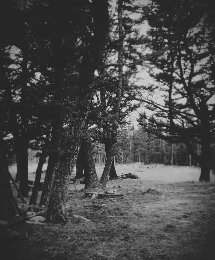 Através da floresta foto de stock royalty free