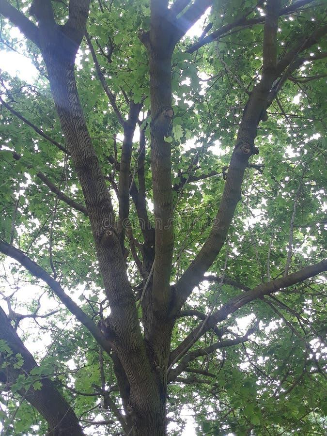 Através das árvores fotografia de stock