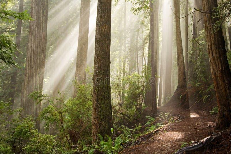Através Das árvores Imagens de Stock Royalty Free