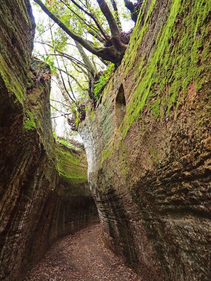 Através de oco, uma estrada antiga de Etruscan cinzelou através dos penhascos do tufo em Toscânia imagens de stock royalty free