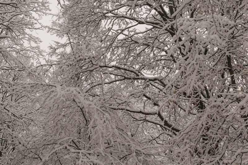 Através do laço de coberto de neve fotografia de stock